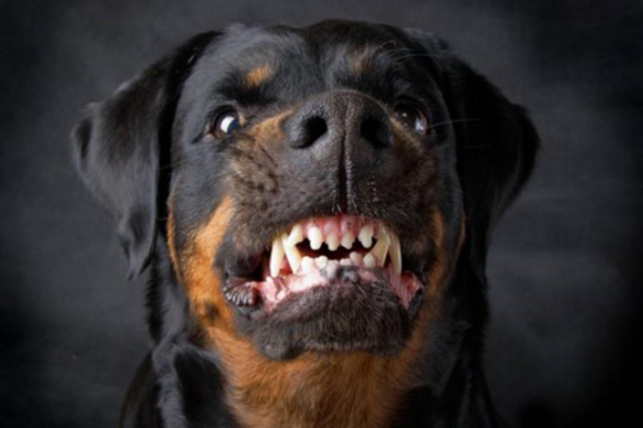 К чему снятся злые собаки, которые кусают и нападают?