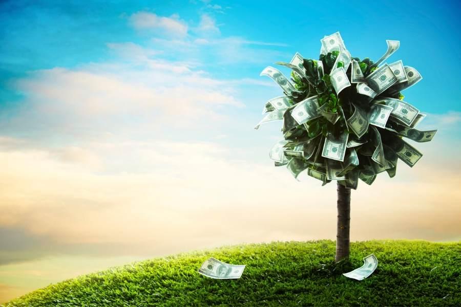 Как правильно посадить денежное дерево, чтобы привлечь деньги?