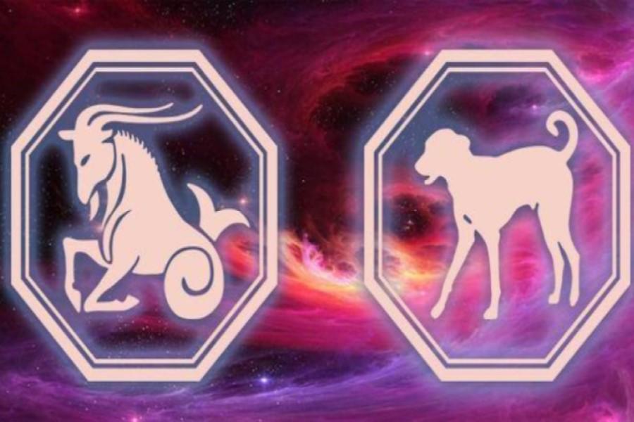 Козерог-Собака: характеристика мужчины и женщины