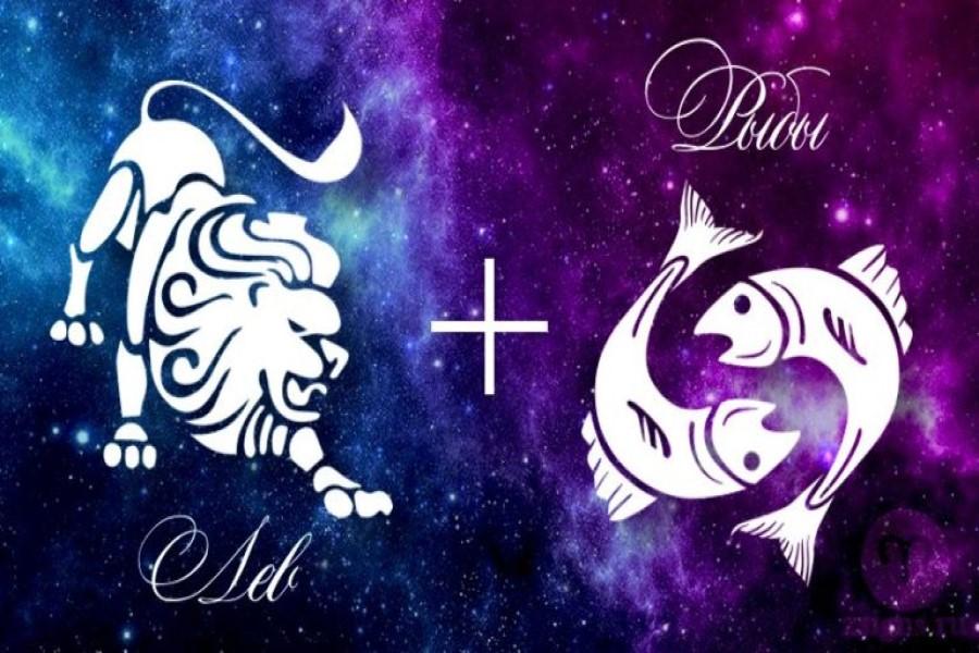 Лев и Рыбы: совместимость женщин и мужчин в любви, работе и дружбе