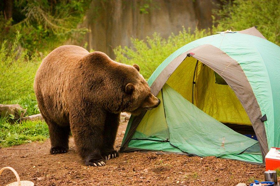 Медведь нападает на человека: толкование сна