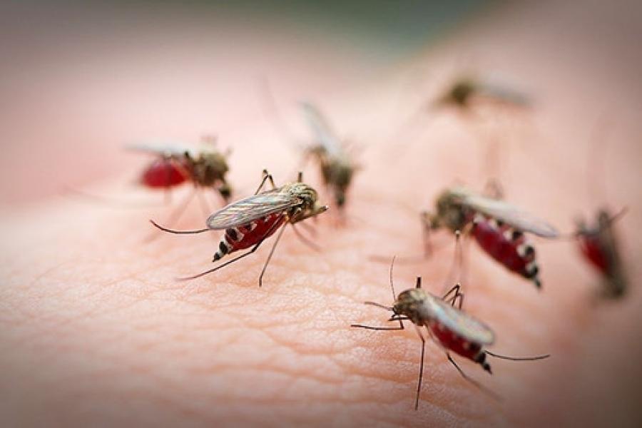 Почему снятся комары: толкование сновидения