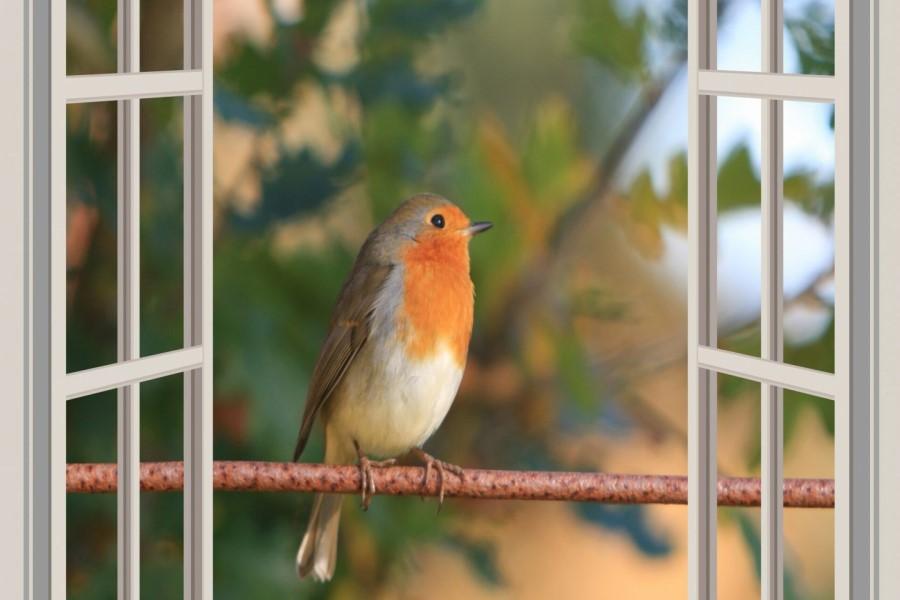 Чего ждать, если птица ударилась в окно и улетела?