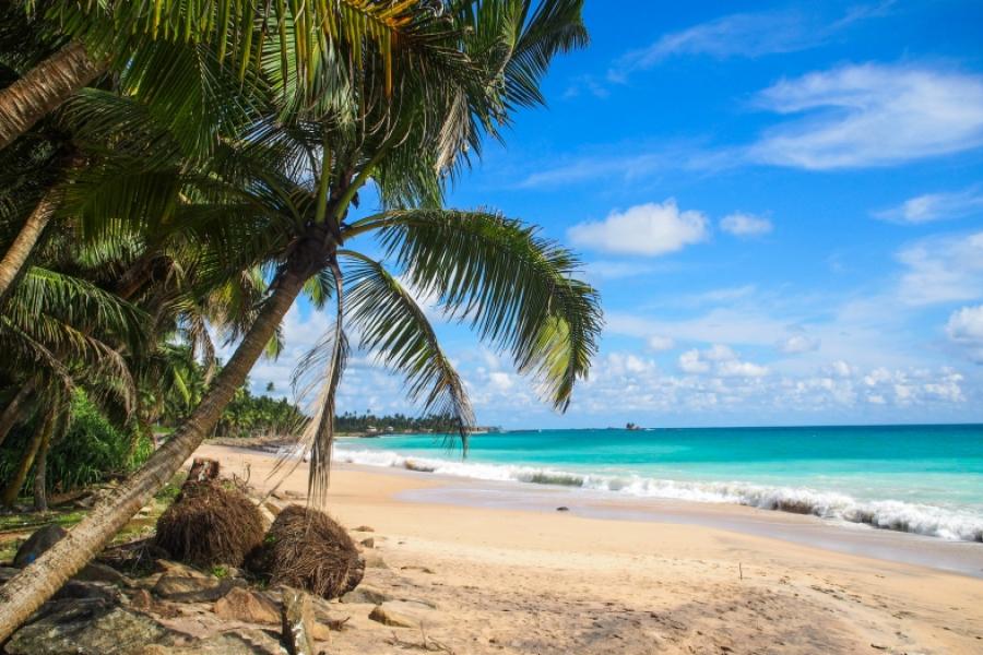 К чему снится пляж: толкования различных сонников