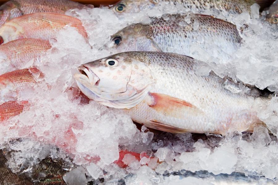 К чему снится замороженная рыба?