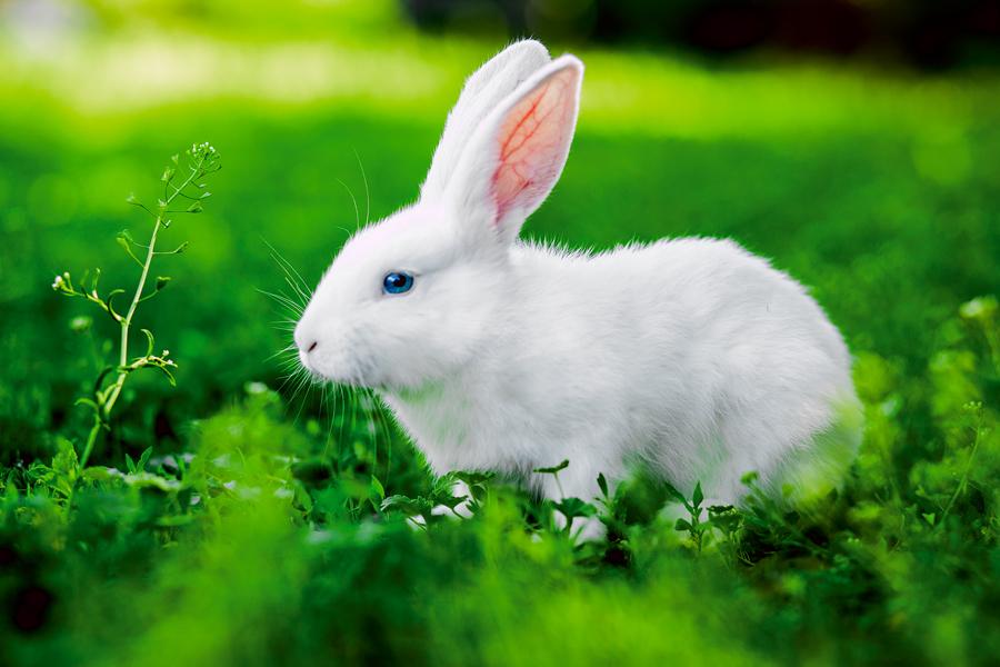 К чему снится заяц по версии различных сонников?