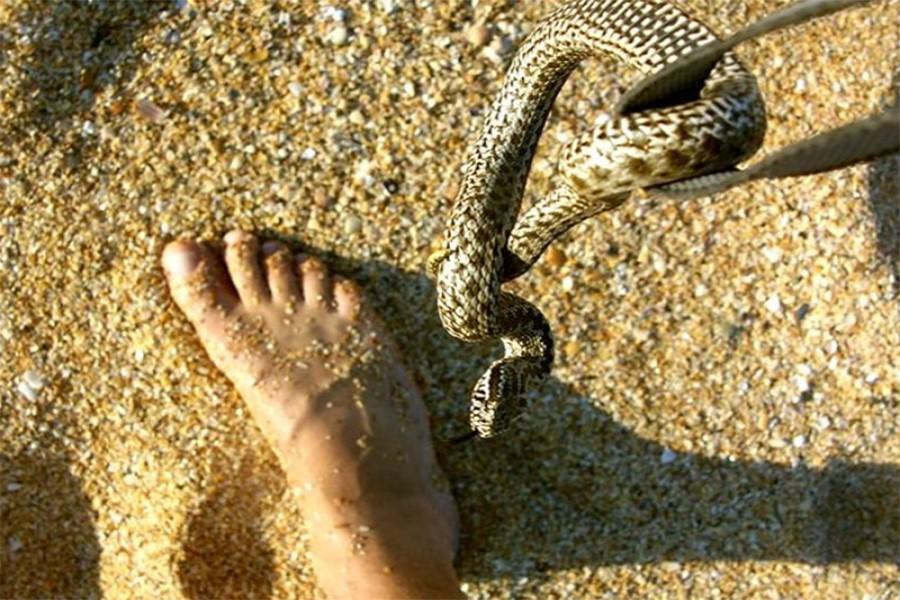 К чему снится змея, которая кусает за ногу?