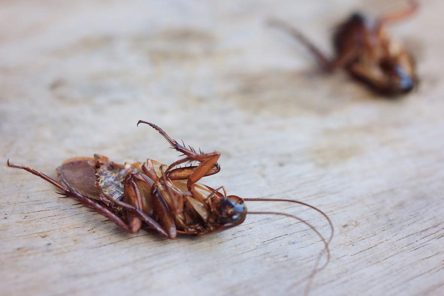 Сонник: к чему снится убивать тараканов?