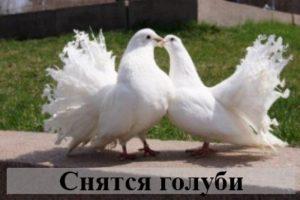 Тайны снов: к чему снятся голуби?