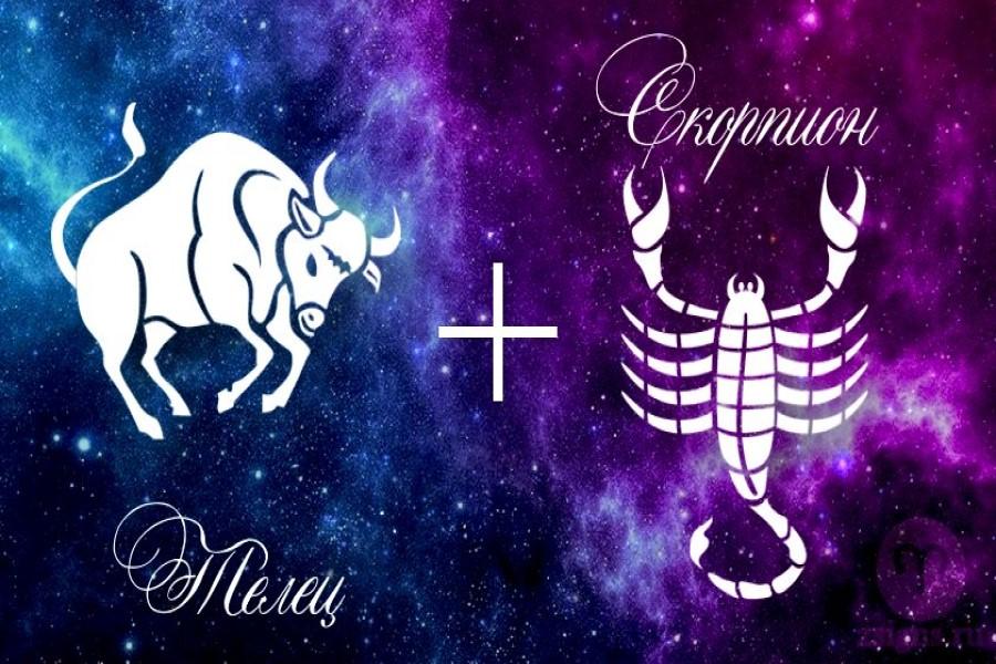 Телец и Скорпион — совместимость знаков в любви, браке, дружбе и на работе