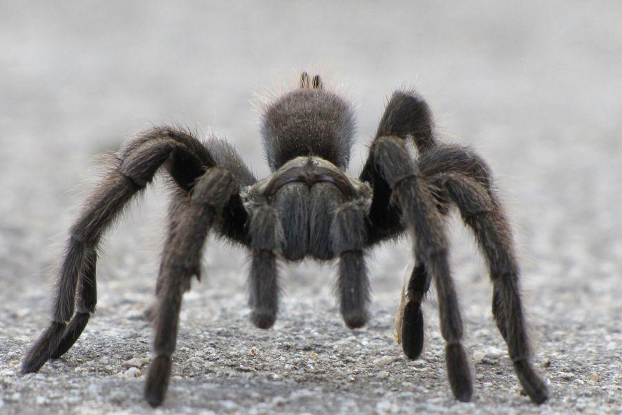 Увидеть паука утром, вечером или ночью: народные приметы