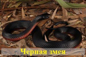 Видеть во сне черную змею — что означает сон?