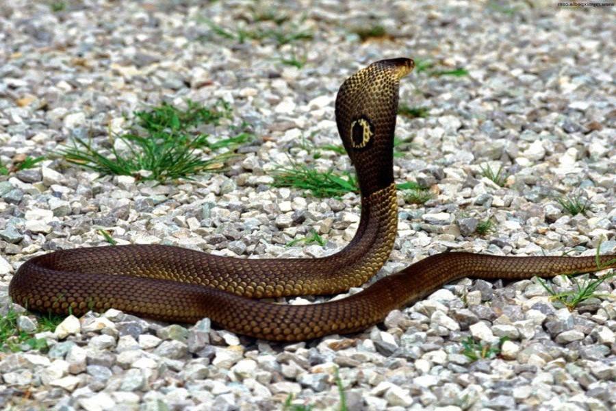 Змея во сне нападает: толкование сновидения