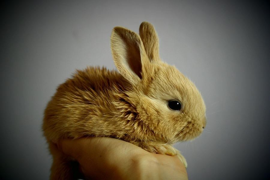Значение фигуры заяц (кролик) при гадании на воске