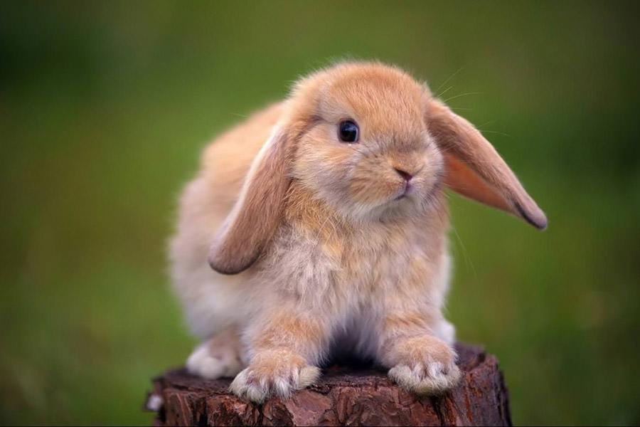 Люди, рожденные в в год Кролика, совместимость с другими знаками зодиака