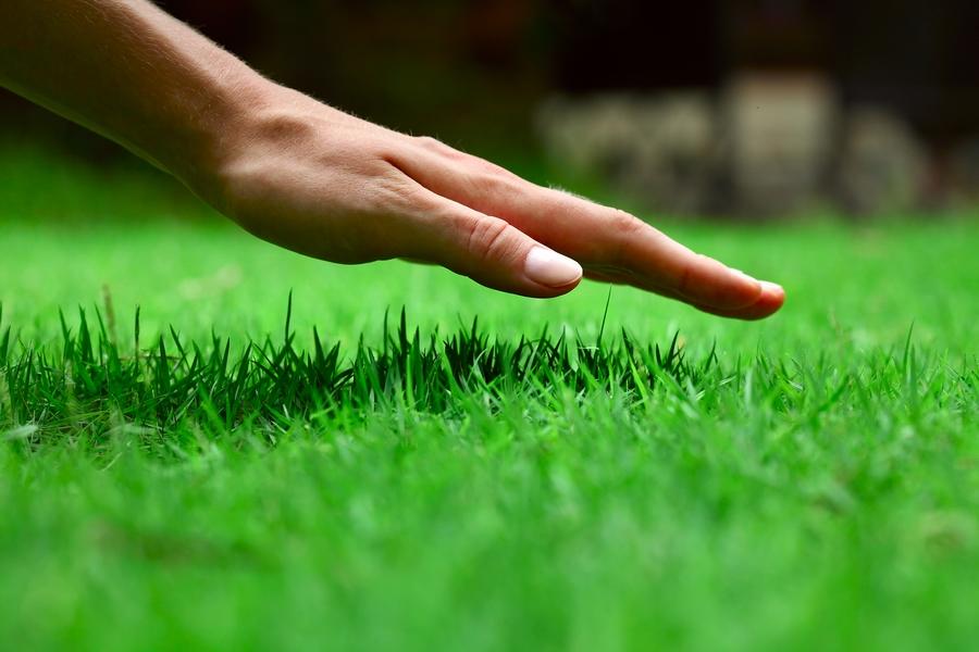 К чему снится зеленая трава, значение сновидения?